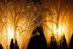 Unusual brown flower wallpaper Stock Images