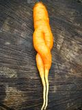 Unusual carrot lying on a stub Stock Photography