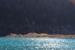 Incredible beautiful water`s color with sunlight on surface. Unusual color of water and tien shan spruces mountain forest on the other bank. Spot of sun rays on royalty free stock images