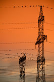 Unusual cormorant colony Stock Photography