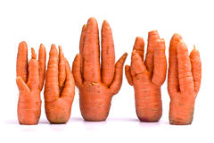Unusual crop of carrots. On white background stock photography