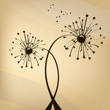 Unusual dandelion Stock Image
