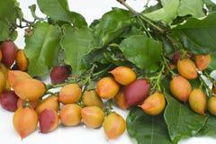 Unusual edible fruit Bunchosia argentea called caferana in Brazil in white background.  stock photos