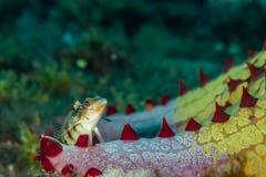 Unusual fish underwater royalty free stock photo