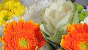 Unusual flower amongst colourful flowers Stock Photos