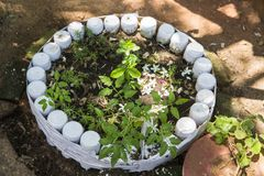 Unusual flower bed in the garden. A flower bed out of old water bottles. flowerbed design. Spring, summer, garden. use of machine. Unusual flower pot bed in the Stock Photos