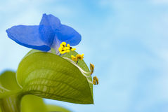 Unusual flower blue on background blue Royalty Free Stock Images