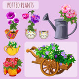 Unusual flower pots on a pink background Royalty Free Stock Images