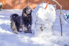 Unusual friends:the snwoman and a dog. A black dog is sniffing out a snowman in a winter landscape Royalty Free Stock Photo