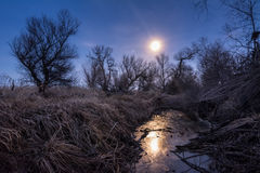 Unusual full moon night  with cane and trees silhoettes Stock Image
