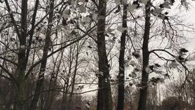 Unusual gray black maple leaves. Hanging on tree in winter in a city Park, the gray sky on the background of many different trees and shrubs stock video