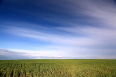 Unusual green field and sky Stock Image