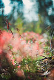 Unusual green plant in the wood Stock Photography