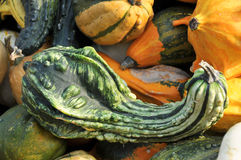 Unusual green pumpkin Royalty Free Stock Photo