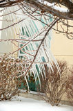 Unusual Icicles on Tree Branches Royalty Free Stock Photo