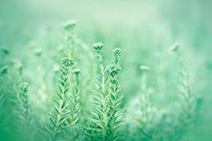 Unusual little green flower Royalty Free Stock Photo
