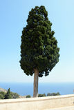 Unusual lonely tree in the Preveli monastery. Crete, Greece. Beautiful greek tree in the Preveli monastery Stock Images