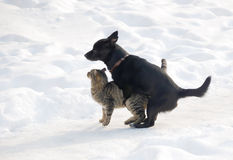 Unusual love. A cat and a dog trying to make love Stock Images