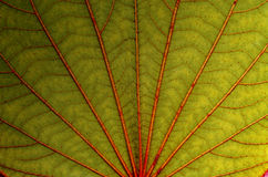 Unusual Macro of green leaf Royalty Free Stock Photo