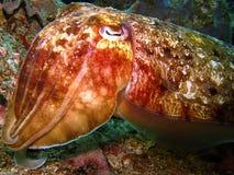 Unusual marine creature Stock Photos