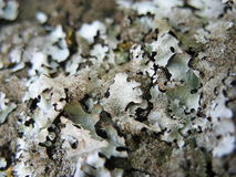 Unusual moss Stock Photo