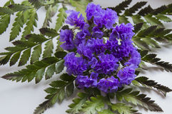 Unusual nosegay of the purple flowers. On a green leaf royalty free stock photo