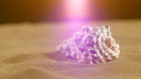 Unusual ocean shell, white, on sand, back light. Beautiful and wonderful, unusual ocean shell and white, on sand, back background, close up, rotation stock video footage
