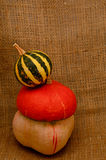 Unusual orange hat pumpkin  and small watermelon Stock Images