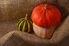 Unusual orange hat pumpkin  and small watermelon Royalty Free Stock Image