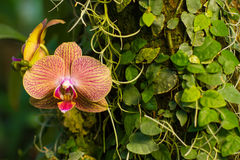 Unusual orchid Royalty Free Stock Image