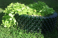 Unusual original bed of green champagne bottle. Unusual original flower bed built of green used empty glass bottles of champagne. From flower beds growing green royalty free stock photography