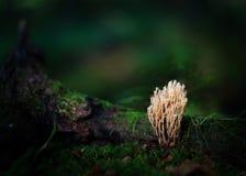 Unusual pale lichen Stock Images