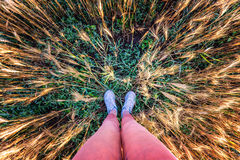 Unusual perspective legs wheat field. Wheat wide frame Stock Photography