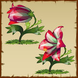 Unusual picture of red Lily flower buds. Unusual vector picture of red Lily flower buds stock illustration