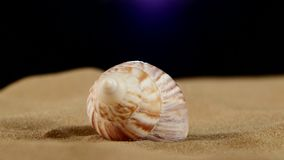 Unusual pink marine seashell on sand, rotation stock video footage