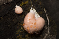 Unusual pink tree fungus Stock Photo