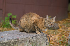 Unusual Red Cat from a Shelter from Donetsk Stock Photography