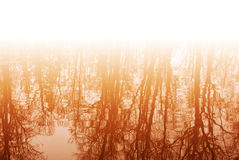 Unusual reflection trees. Unusual reflection in water of autumn trees Royalty Free Stock Photography