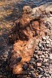 Shore rock Stock Image