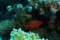 Unusual saltwater fish Stock Image