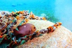 Unusual saltwater fish Royalty Free Stock Image