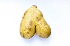 Unusual shape of natural potato Stock Photography
