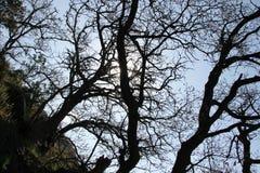 Unusual shape of the tree Royalty Free Stock Photos