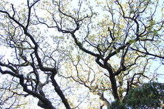 Unusual shape of the tree Stock Image