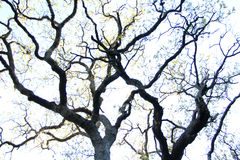 Unusual shape of the tree Royalty Free Stock Images