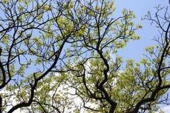 Unusual shape of the tree Stock Photos