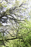 Unusual shape of the tree Stock Photo