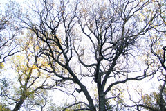 Unusual shape of the tree Royalty Free Stock Photography