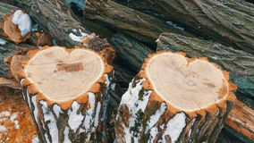 The unusual shape of two tree trunk in the shape of a heart, St. Valentine`s Day