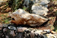 Unusual shaped rock formation resembling fish with face mouth nose and eyes resting in shade of large tree on traditional stone. Unusual shaped rock formation royalty free stock image